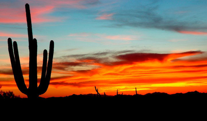 Saguaro at sunset arizona