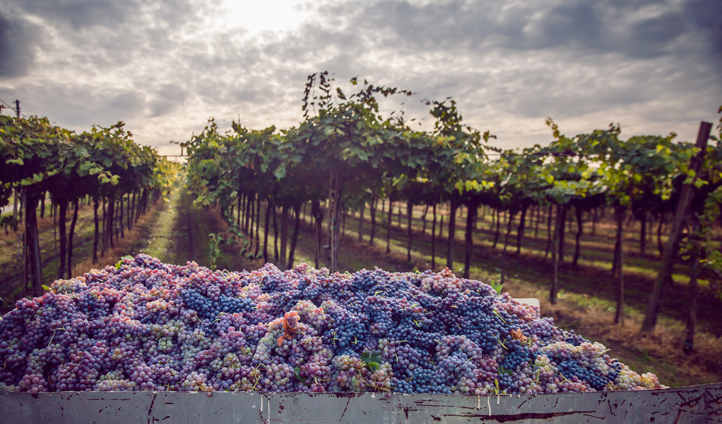 See how wine in made in Napa Valley