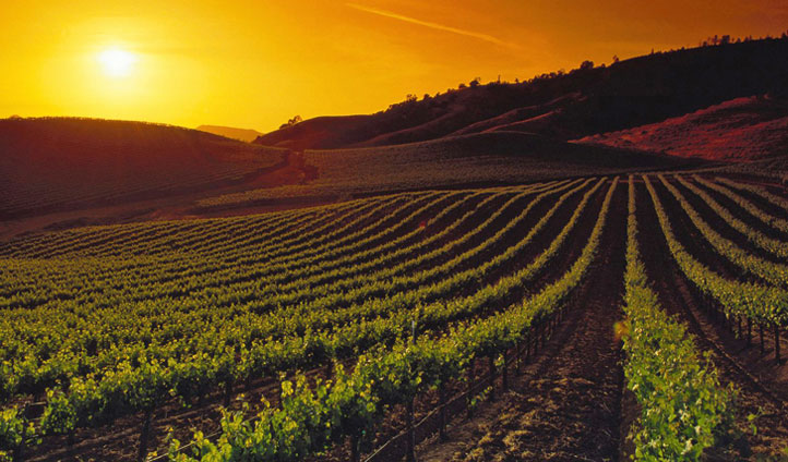 Take a stroll through the vineyards before sampling the wine