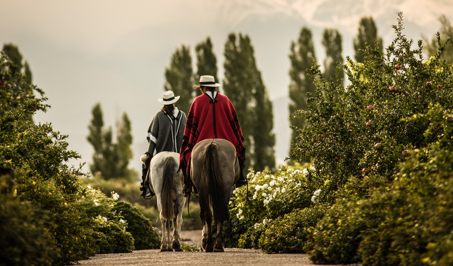 Explore the vineyards by horseback