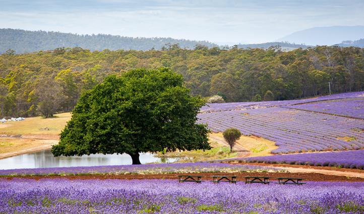 Discover the colours of Tasmania