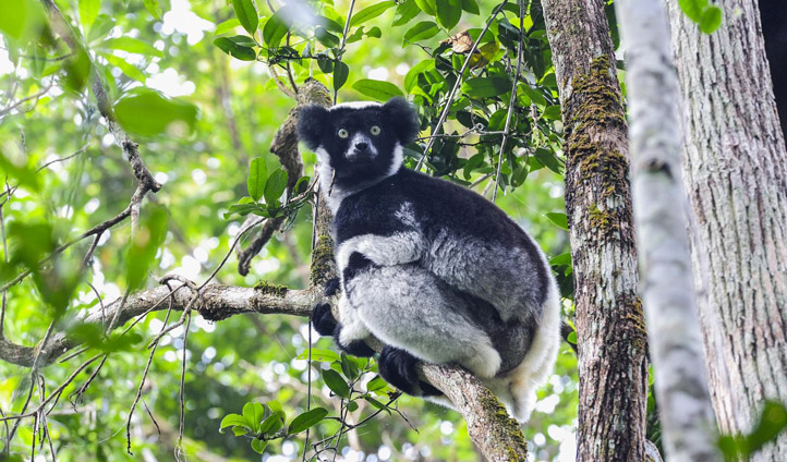 Look out for Madagascar's famous animal- the Lemur