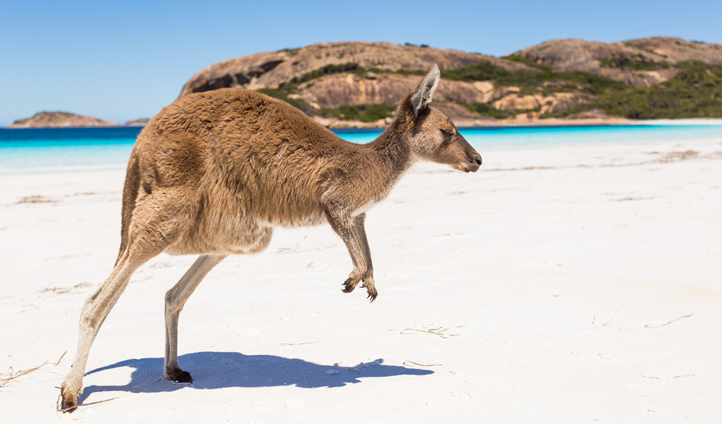 Mix with the locals on Kangaroo Island