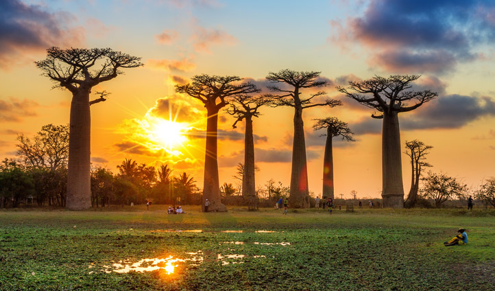 Take some time to admire the iconic baobabs