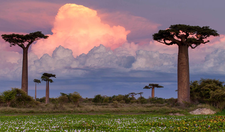 Plant your own baobab tree and watch as the sun goes down