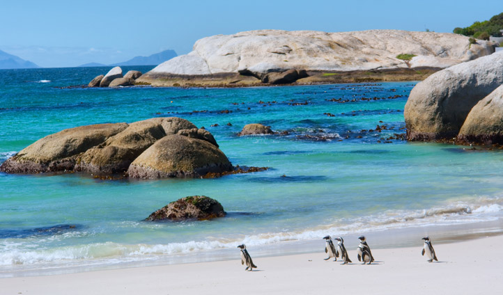 Boulders Beach South Africa | Black Tomato