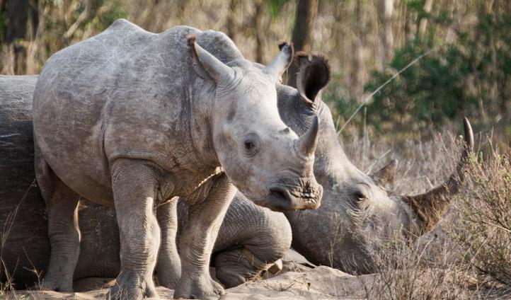 Spotting Rhino in South Africa   Black Tomato