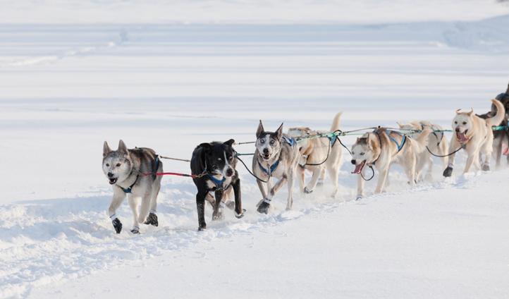 Dog sled, Yukon, Canada