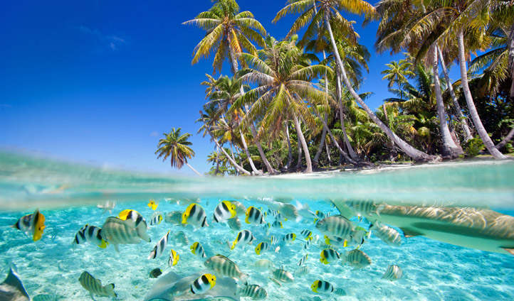 Snorkelling in Tahiti