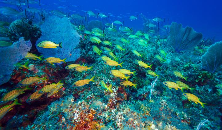 Dive deep in Cuba