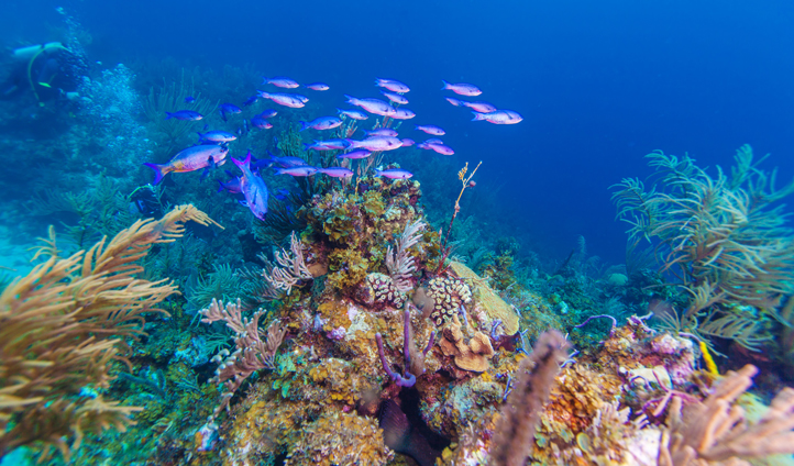 Snorkel amoungst coral reefs