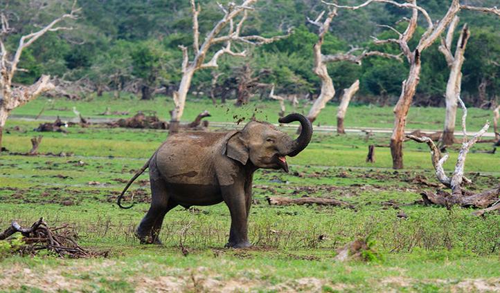Walk alongside Yala's wildlife