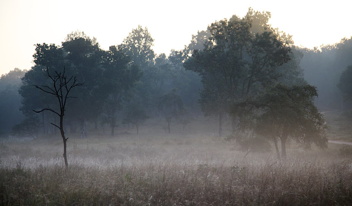 Kanha National Park at dawn.