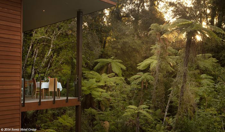 Dine in the treetops