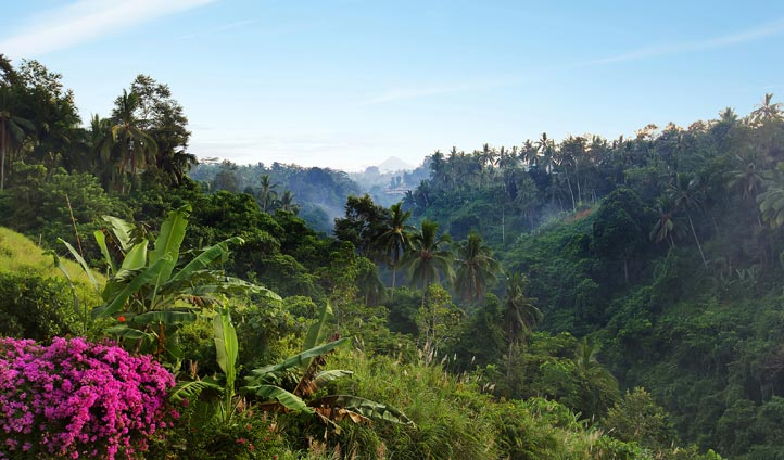 Valley, Ubud, Indonesia