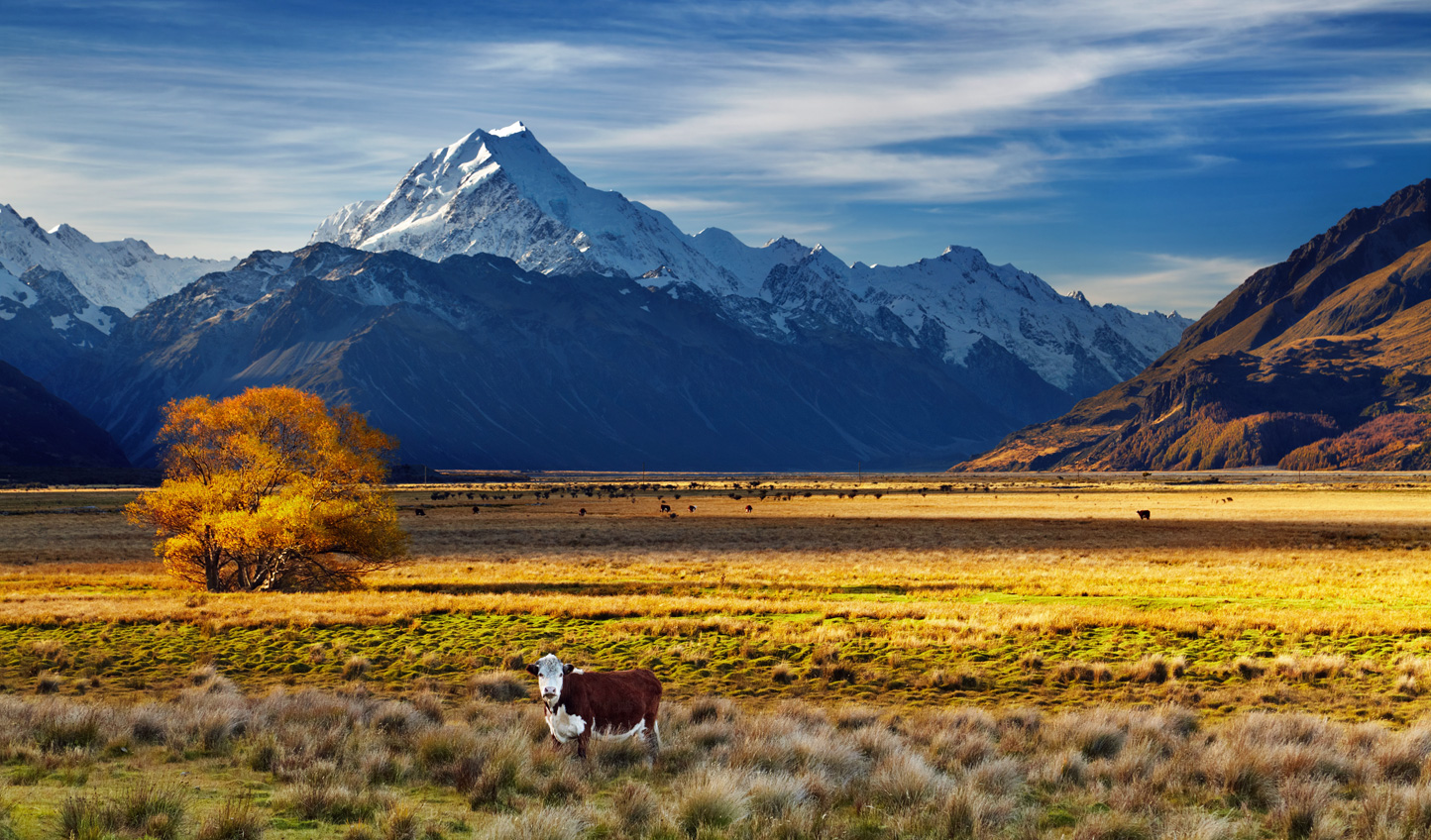 Cross the Canterbury Plains as you head into Christchurch