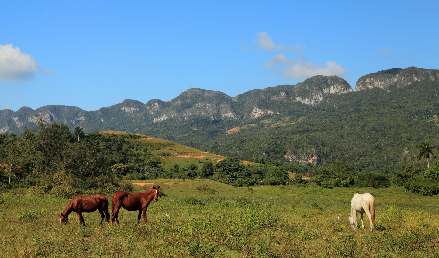 Embark on a journey through the Vinales Valley on horseback