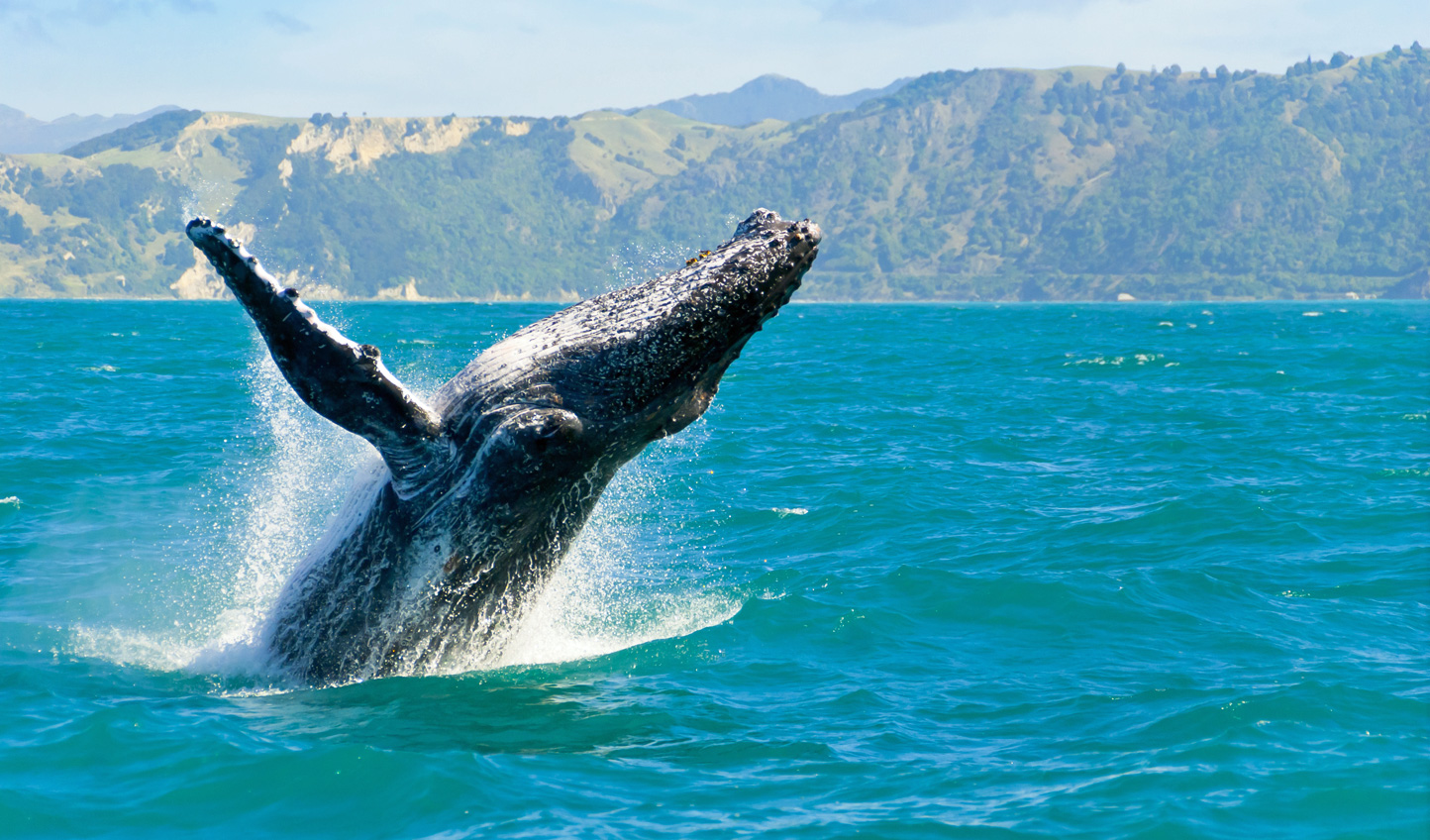 Head out on a whale watching adventure and watch as they put on a show
