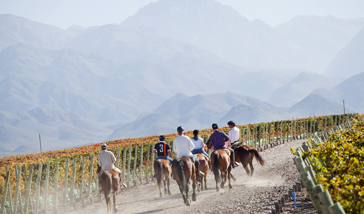 Ride on horseback through the estate