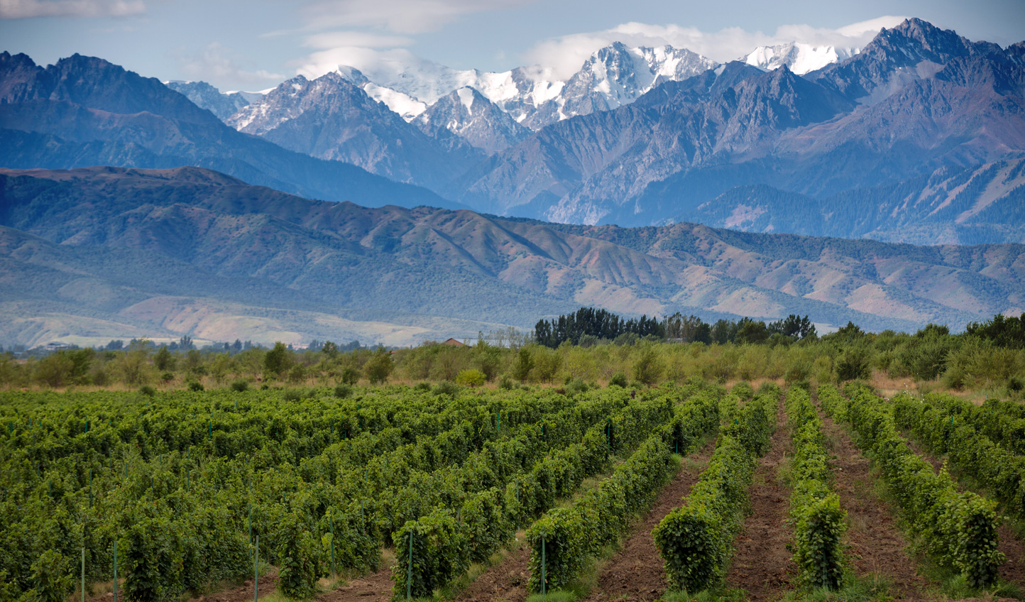 See the vineyards of Mendoza with the magnificent Andes backdrop