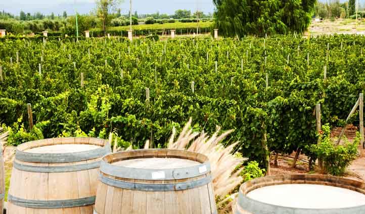 A luxury escape in argentina and uruguay black tomato for Jardin d hiver wine