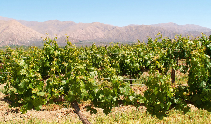 The vineyards and mountains collide in El Cafayate