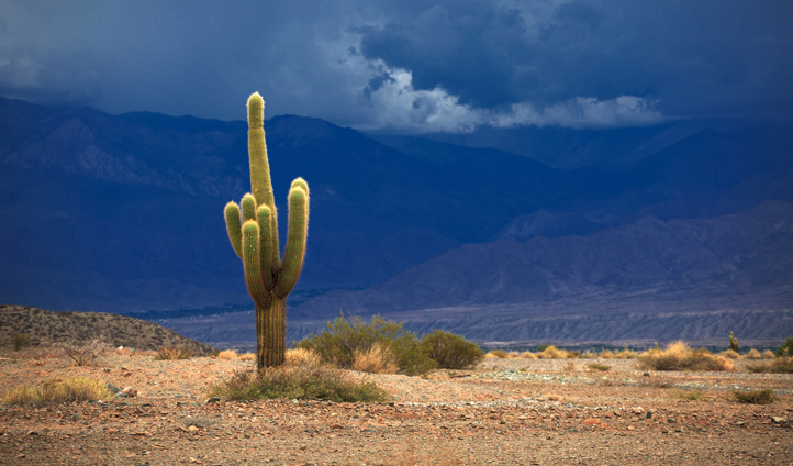 Los Cardones National Park is not far away