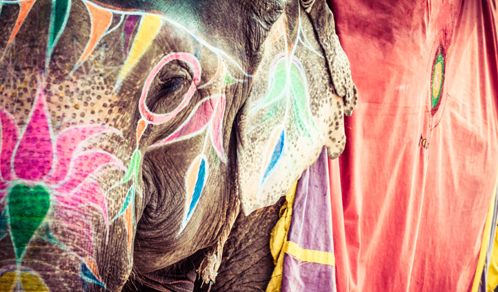 decorated elephant in Rajasthan, India