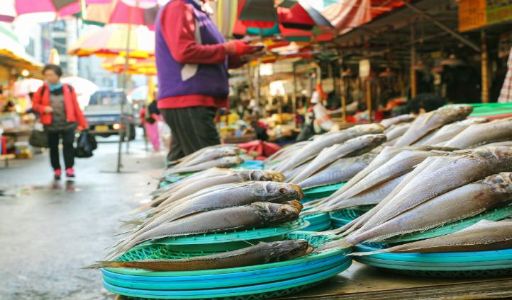Fresh fish at Jagalchi Fish market