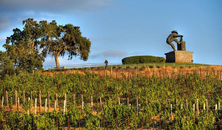 The Meritage Resort's vineyards, Napa Valley