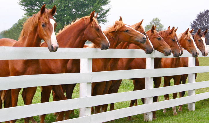 Say hello to some of Kentucky's hoofed residents
