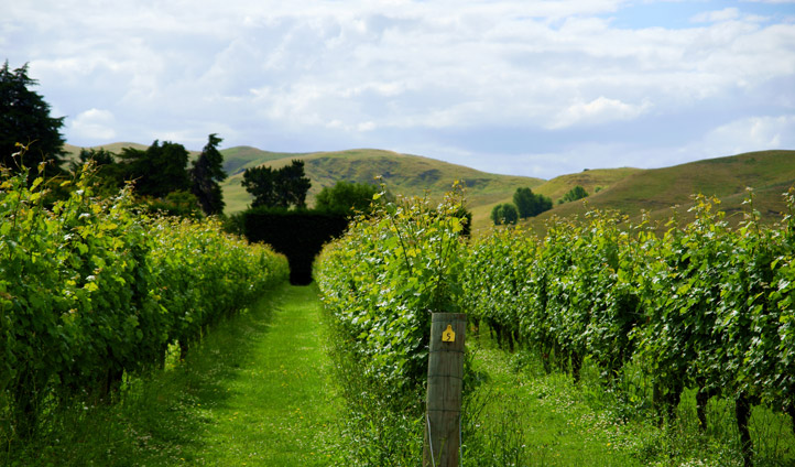 Taste the fruits of the earth in Hawkes Bay's vineyards