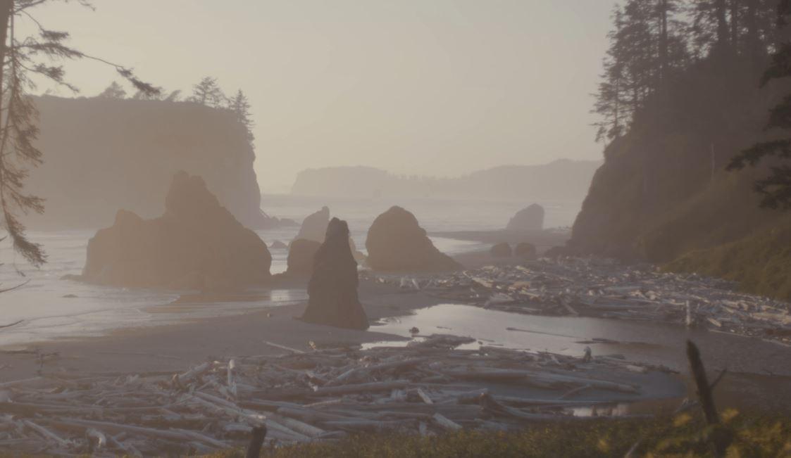 A misty beach in Washington State, USA