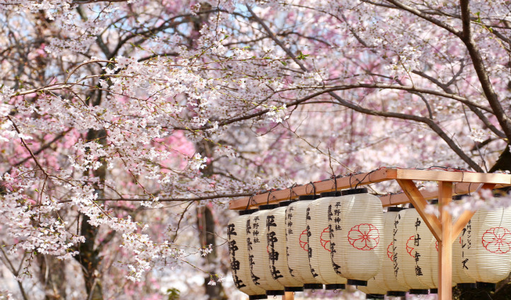 Sakura in Springtime, Japan   Black Tomato