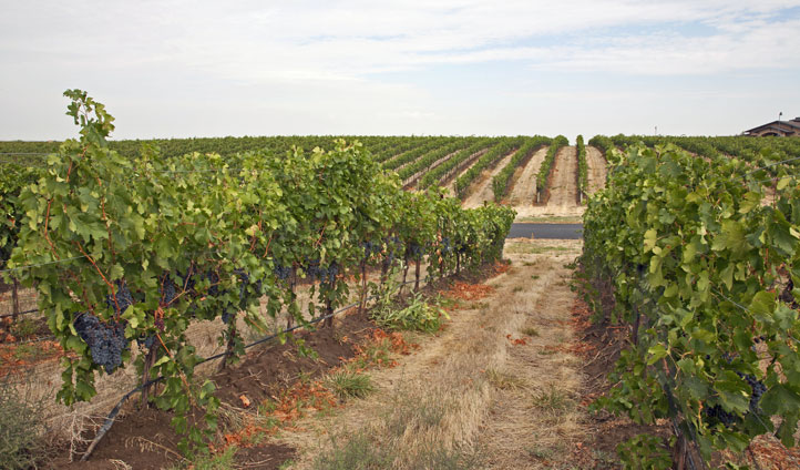 Enjoy the wines of Walla Walla