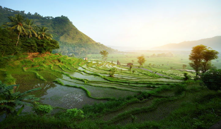 Trek through the Bali rice fields