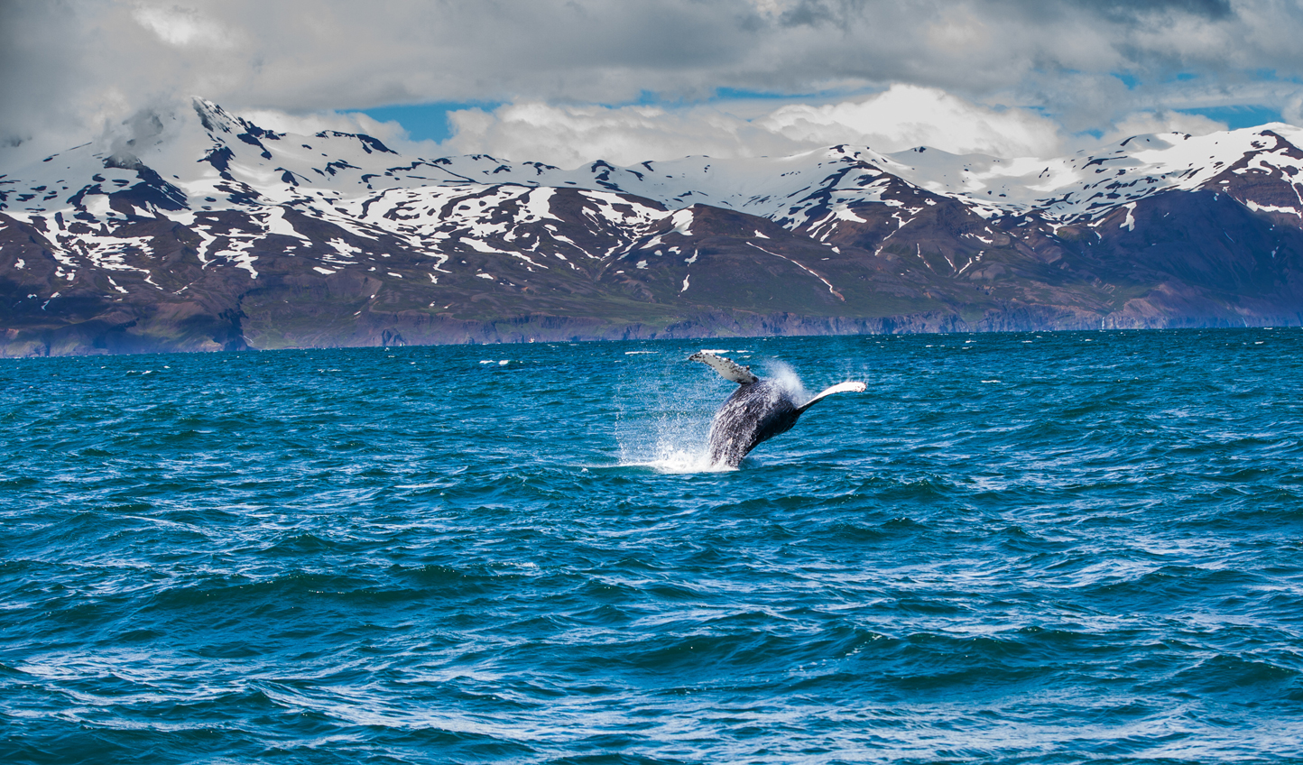 Head out to sea and catch sight pf breaching whales