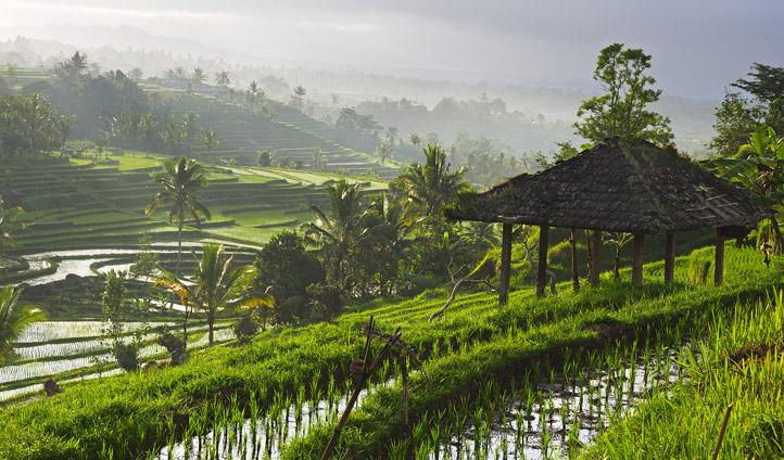 Breaktaking rice terrace views near Ubud
