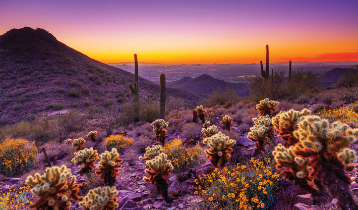 Be inspired by Scottsdale's colour palette