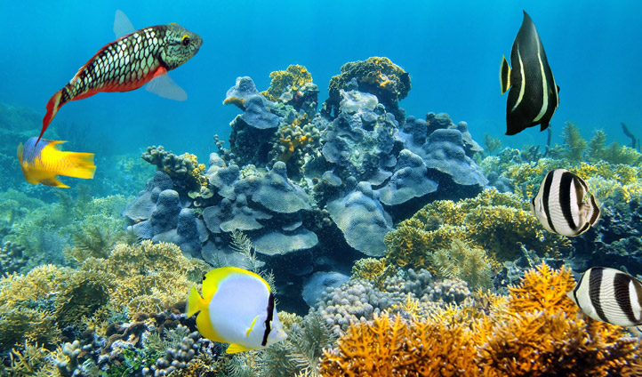 The beauty of Belize's coral reefs