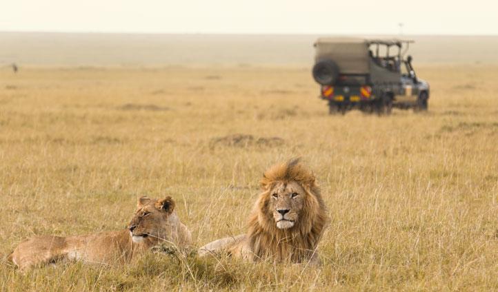 Pair of lions in Kenya