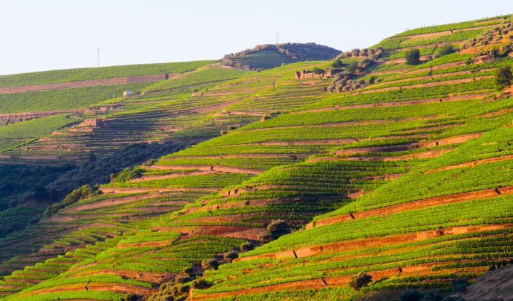 Walk amongst the gardens in Douro Valley and discover incredible vineyards