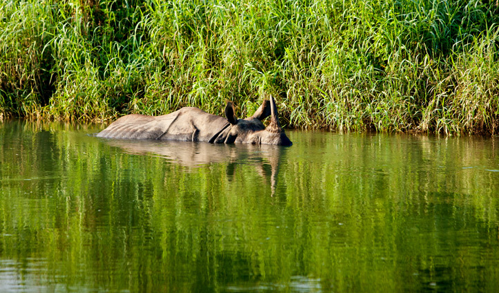 The stunning Chitwan National Park