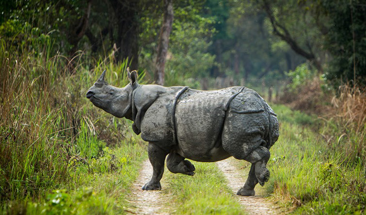 One horned Rhino at Meghauli Serai