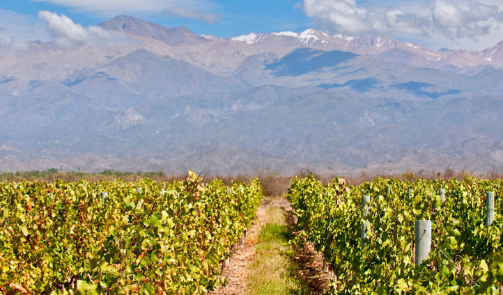 Argentina's rolling vineyards