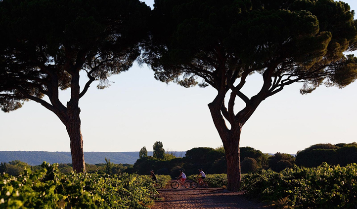 Discover the Ribera del Duero region by bicycle