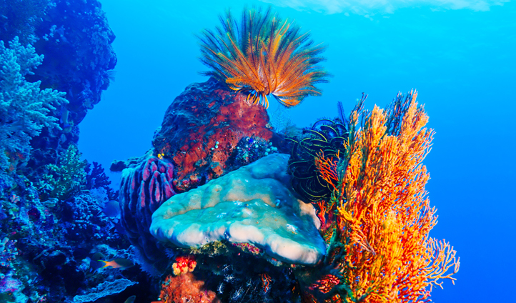 Discover an underwater wonderland