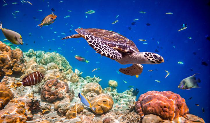 Swim in an underwater wonderland in The Maldives