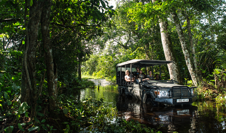 Embark on a game drive like no other