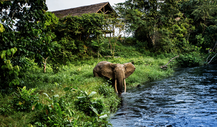 Built on the banks of the Lekoli River, Forest Elephants are a common sighting at Mboko